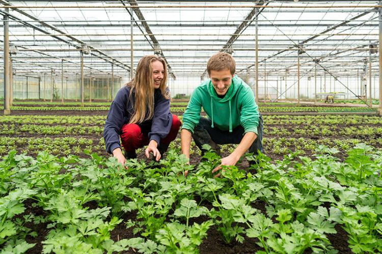 Afbeelding: Warmonderhof, studenten Anniek van der Vaart en Quinten Piek